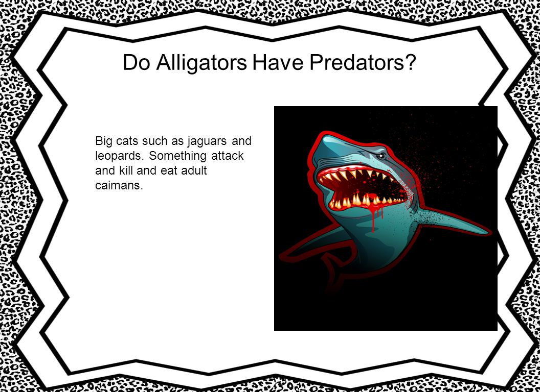 Do Alligators Have Predators? Big cats such as jaguars and leopards. Something attack and kill and eat adult caimans.