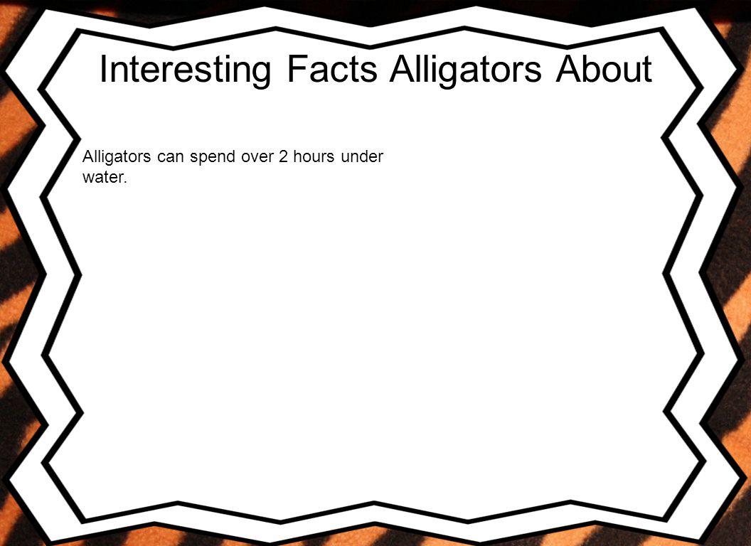 Conclusion I chose Alligator because I like them.