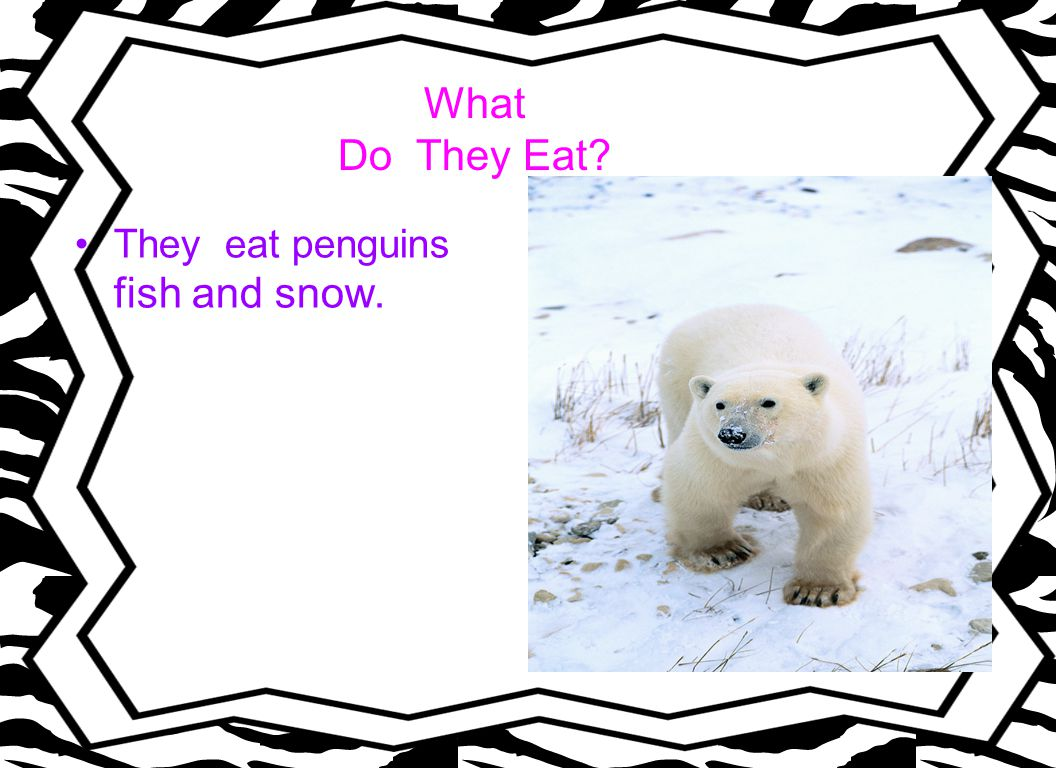 What Do They Eat? They eat penguins fish and snow.