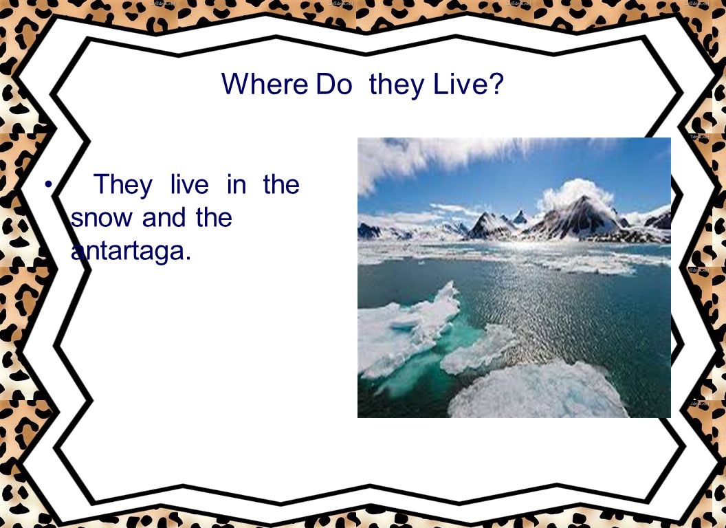 Where Do they Live? They live in the snow and the antartaga.