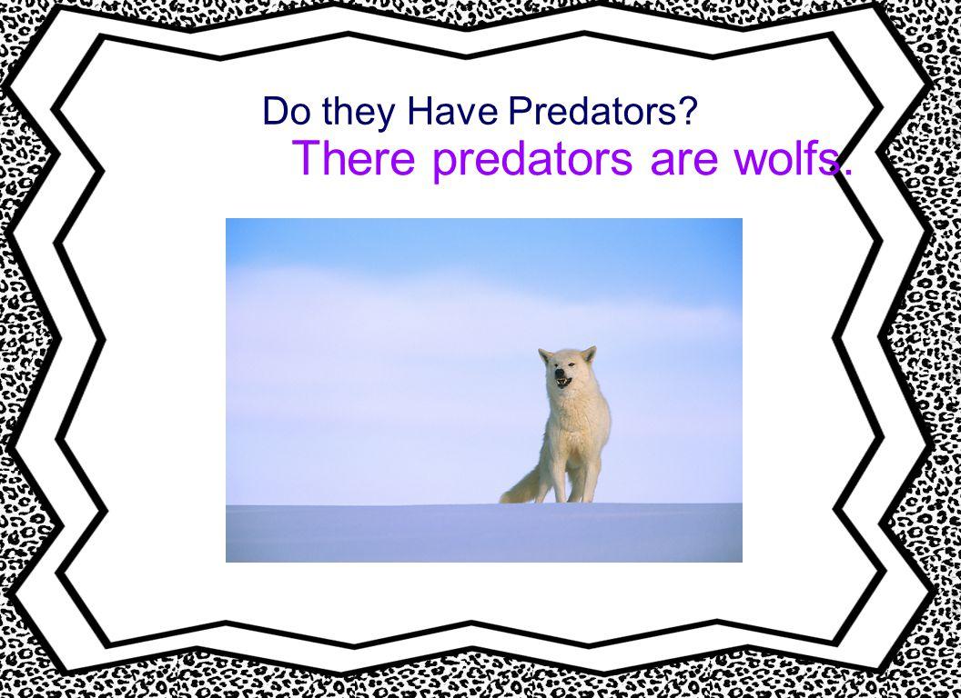 Do they Have Predators? There predators are wolfs.