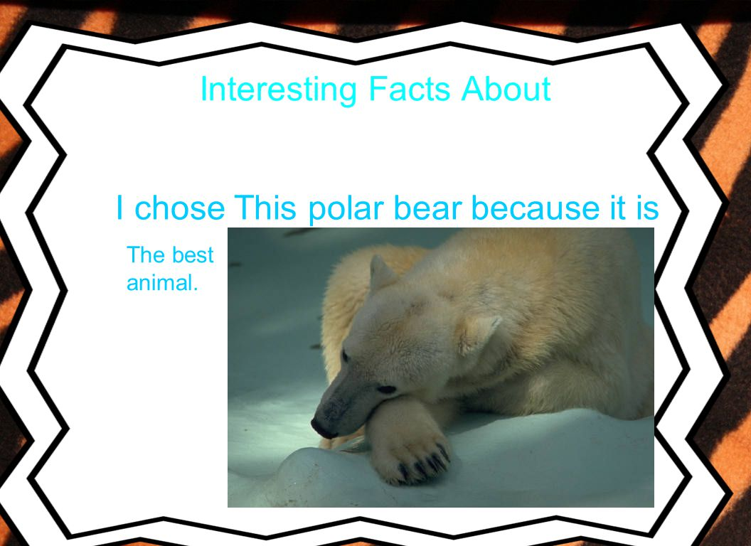 Interesting Facts About I chose This polar bear because it is The best animal.