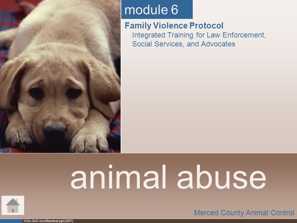 HSA-SAS mod6animal.ppt (5/07) animal abuse Merced County Animal Control module 6 Family Violence Protocol Integrated Training for Law Enforcement, Soc