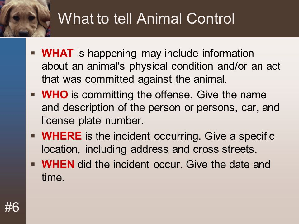 #6 What to tell Animal Control  WHAT is happening may include information about an animal's physical condition and/or an act that was committed again