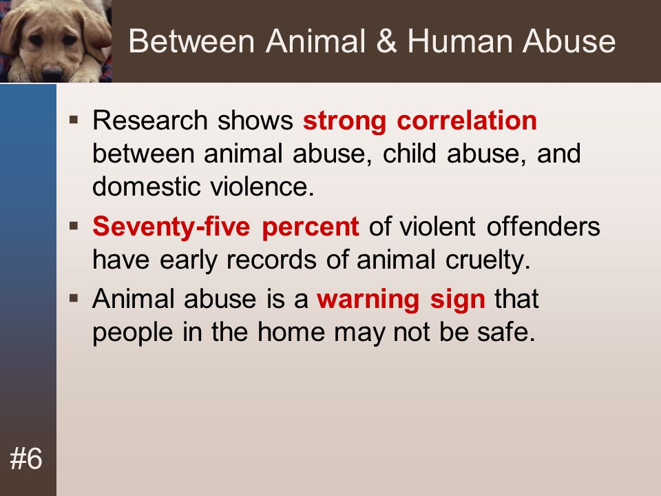 #6 Between Animal & Human Abuse  Research shows strong correlation between animal abuse, child abuse, and domestic violence.  Seventy-five percent o