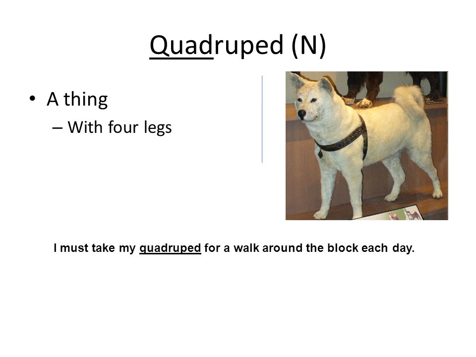 Quadruped (N) A thing – With four legs I must take my quadruped for a walk around the block each day.