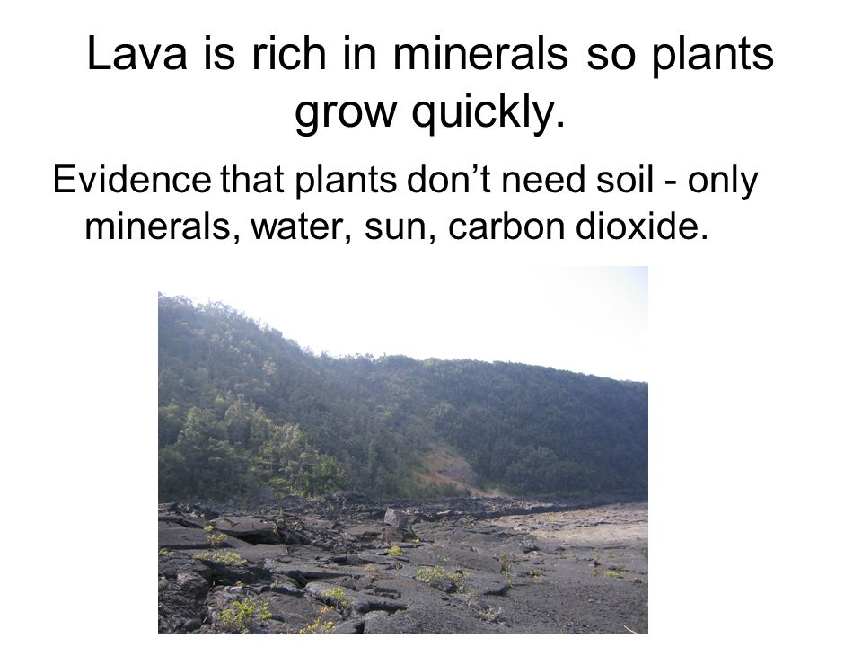 Lava is rich in minerals so plants grow quickly.