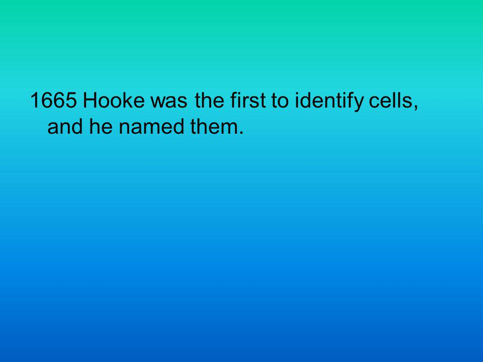 1665 Hooke was the first to identify cells, and he named them.