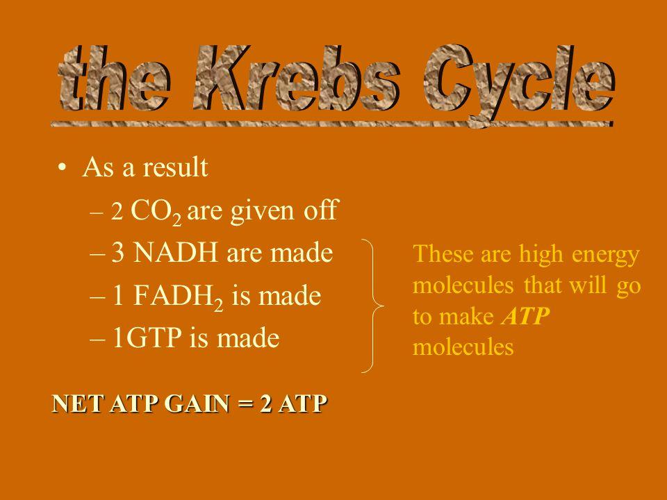 Citric Acid -C 6 C5C5 CO 2 C4C4 C4C4 C4C4 C4C4 C4C4 Acetic Acid -C 2 NAD + NADH NAD + GDP GTP FAD + FADH 2 NAD + NADH