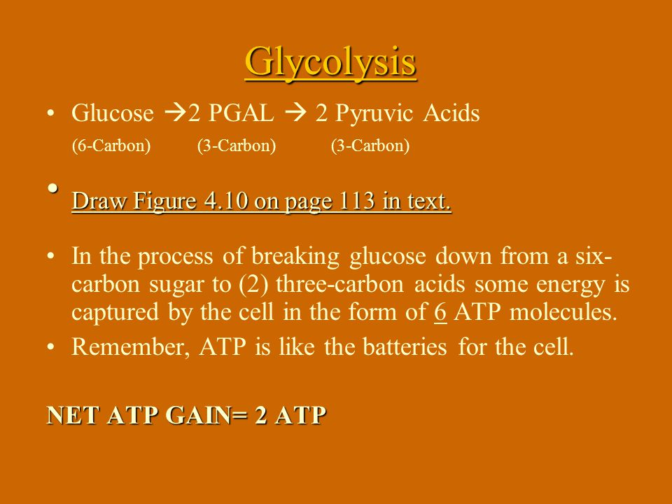 Glycolysis -lysis: to break down. Glyco- refers to the glucose.(remember Hydrolysis) Glycolysis breaks down glucose and gets it ready for the next ste