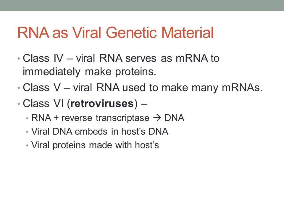 RNA as Viral Genetic Material Class IV – viral RNA serves as mRNA to immediately make proteins.