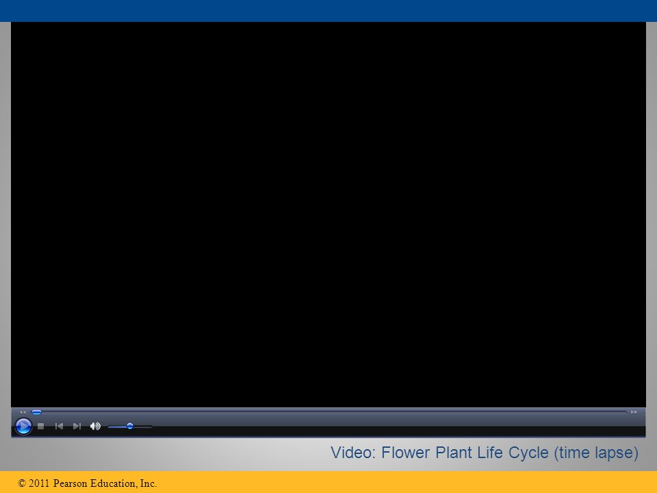 © 2011 Pearson Education, Inc. Video: Flower Plant Life Cycle (time lapse)
