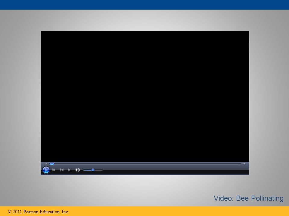 © 2011 Pearson Education, Inc. Video: Bee Pollinating