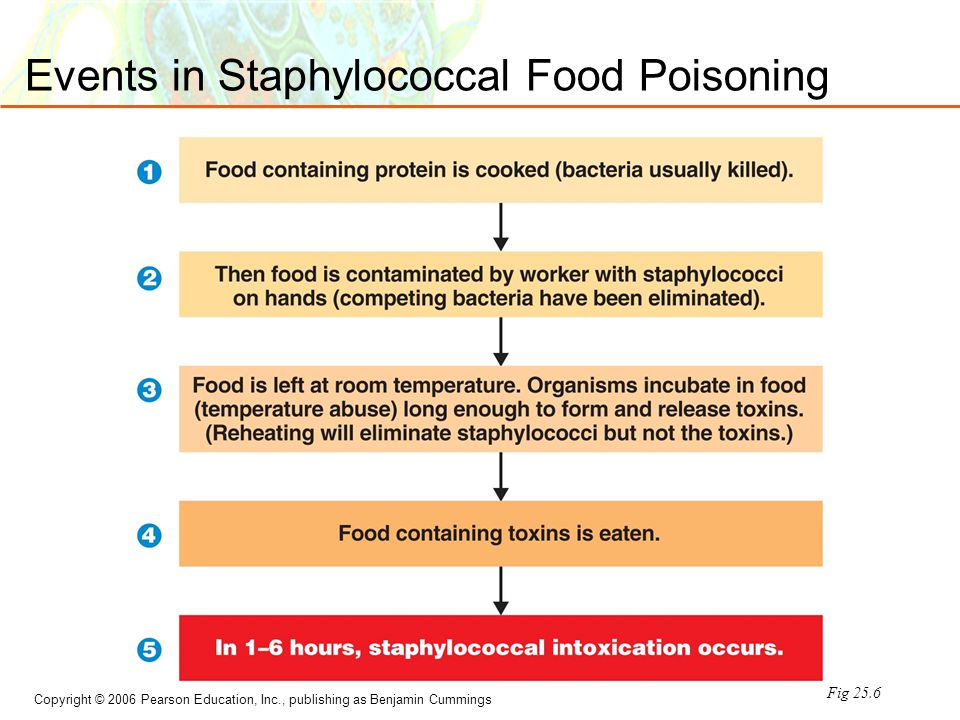 Copyright © 2006 Pearson Education, Inc., publishing as Benjamin Cummings Events in Staphylococcal Food Poisoning Fig 25.6