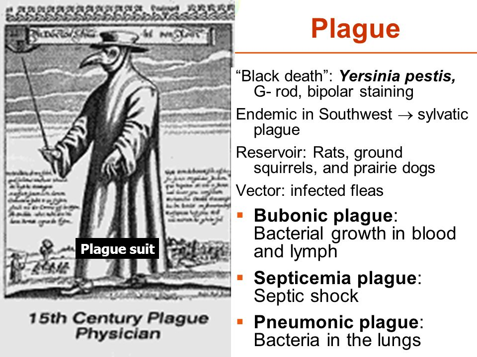 "Copyright © 2006 Pearson Education, Inc., publishing as Benjamin Cummings Plague ""Black death"": Yersinia pestis, G- rod, bipolar staining Endemic in S"