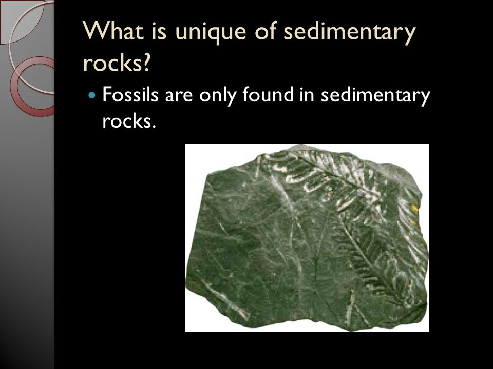 What is unique of sedimentary rocks? Fossils are only found in sedimentary rocks.