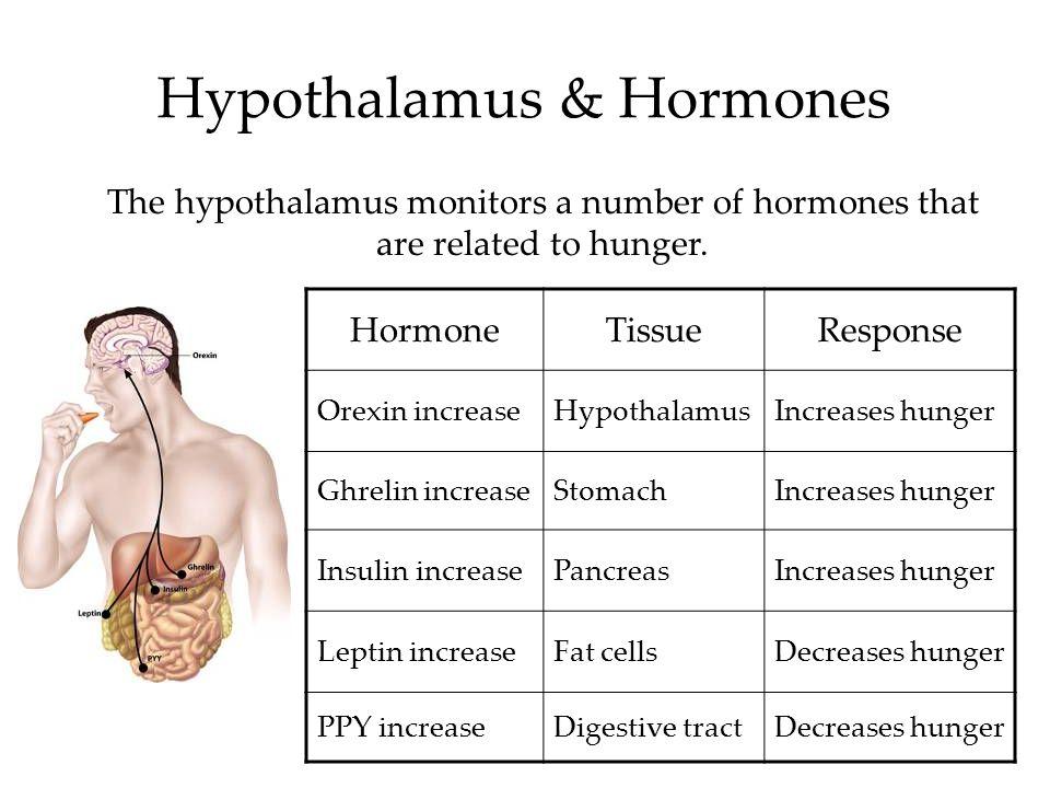 Hypothalamus & Hormones The hypothalamus monitors a number of hormones that are related to hunger. HormoneTissueResponse Orexin increaseHypothalamusIn