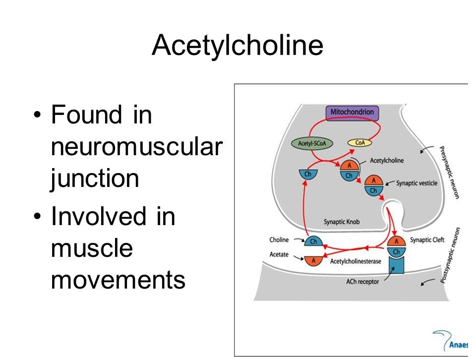 Acetylcholine Found in neuromuscular junction Involved in muscle movements