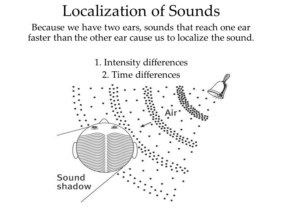 Localization of Sounds Because we have two ears, sounds that reach one ear faster than the other ear cause us to localize the sound. 1. Intensity diff