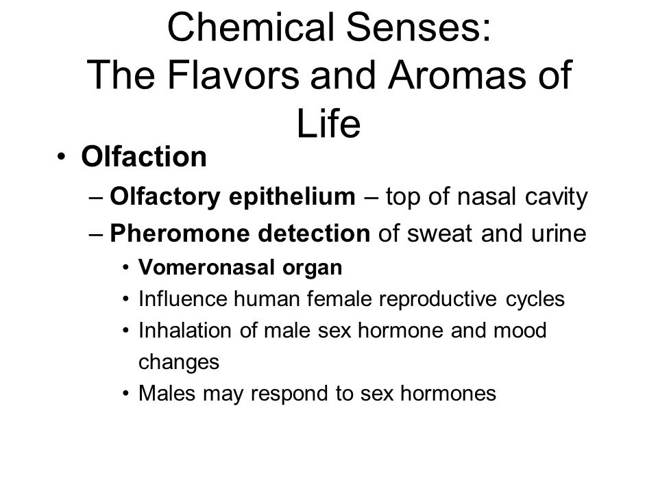 Chemical Senses: The Flavors and Aromas of Life Olfaction –Olfactory epithelium – top of nasal cavity –Pheromone detection of sweat and urine Vomerona