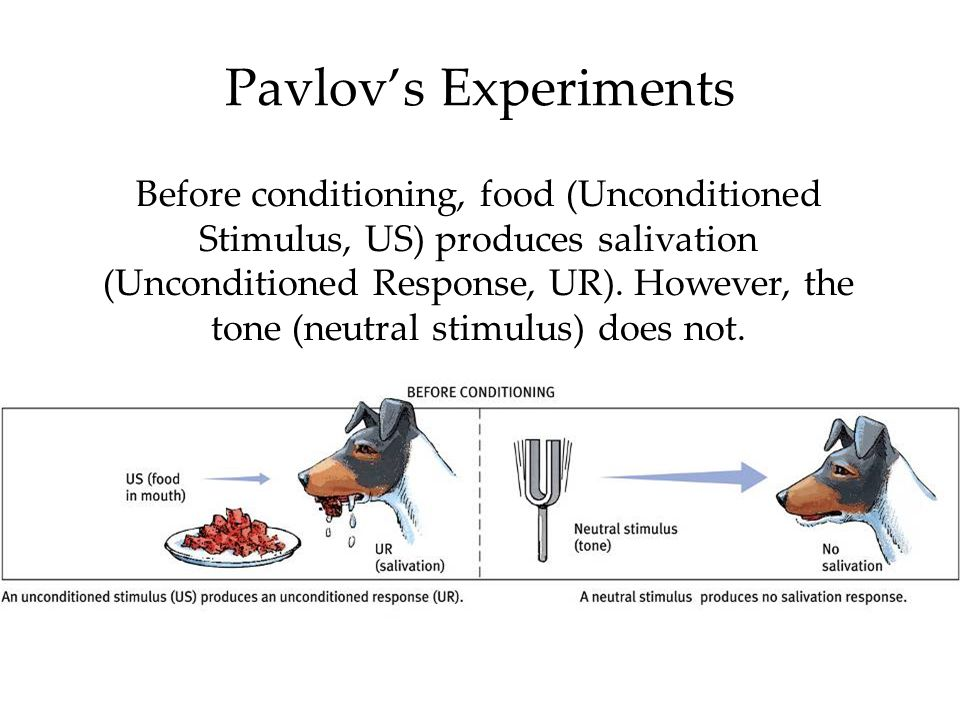 Pavlov's Experiments Before conditioning, food (Unconditioned Stimulus, US) produces salivation (Unconditioned Response, UR). However, the tone (neutr