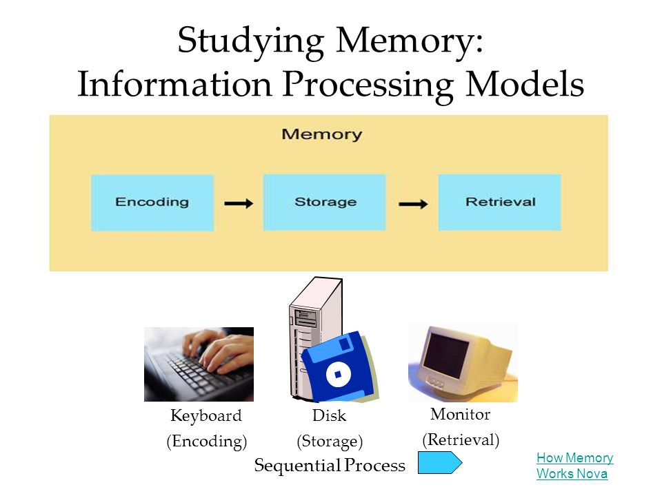 Studying Memory: Information Processing Models Keyboard (Encoding) Disk (Storage) Monitor (Retrieval) Sequential Process How Memory Works Nova