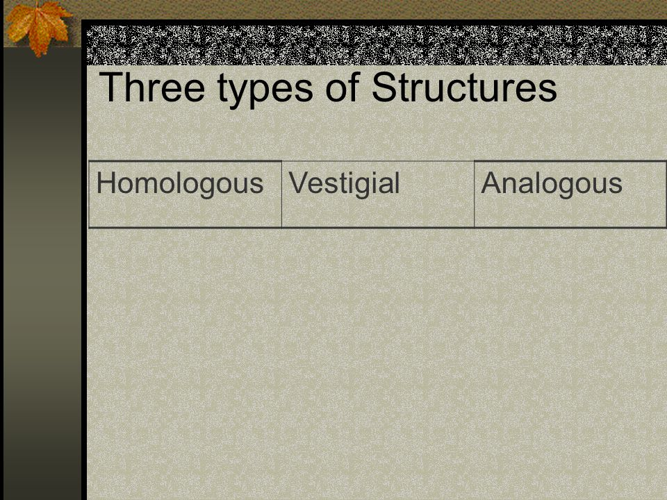3 Types of structures HomologousVestigialAnalogous Similar structures in different species Unused structures that are reduced in size Similar characteristics in different species Share common ancestor No common ancestor.