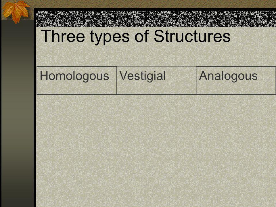 Three types of Structures HomologousVestigialAnalogous