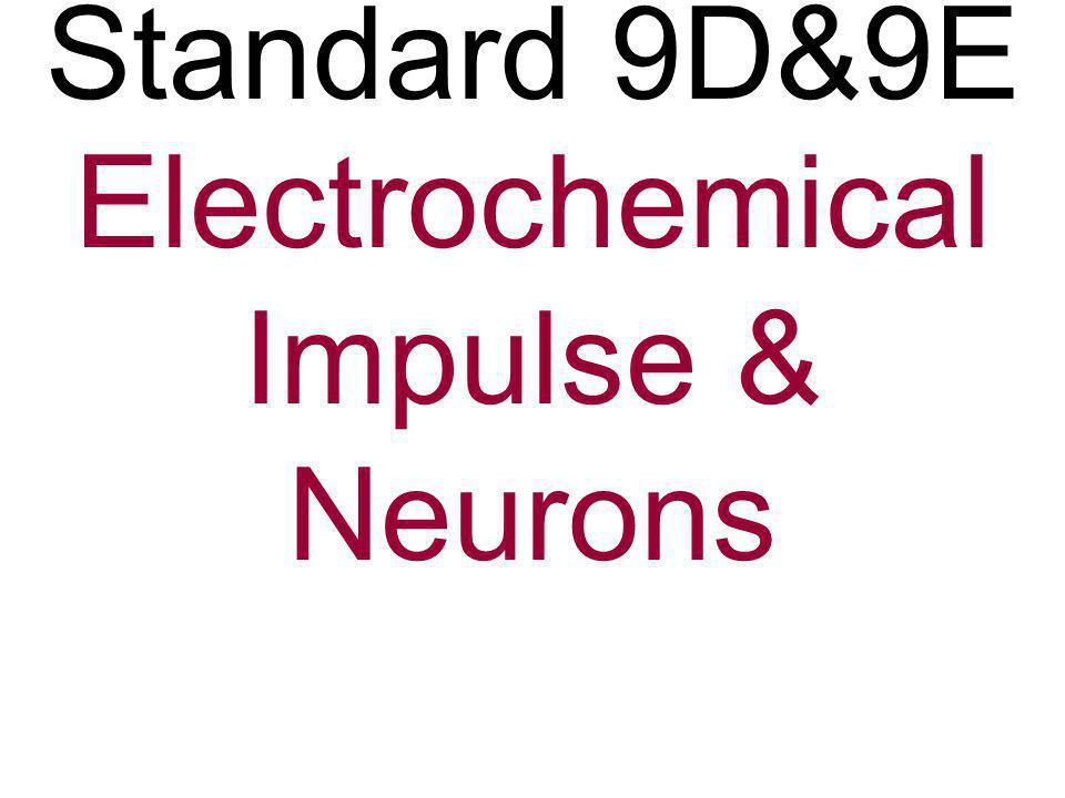 1. (9d) Identify the cell below A.Cell Body B. Axon C. Dendrite D. Neuron