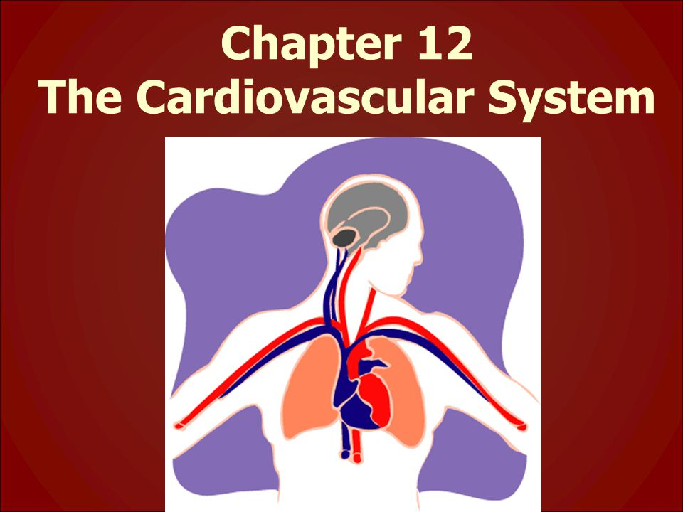 Chapter 12 The Cardiovascular System