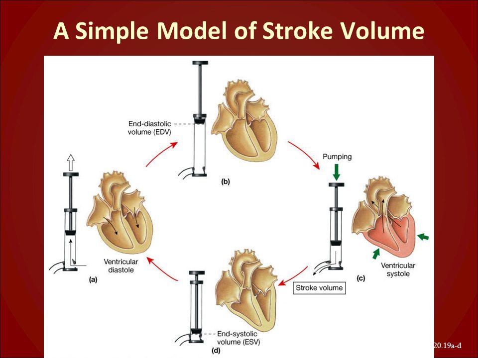 A Simple Model of Stroke Volume Figure 20.19a-d