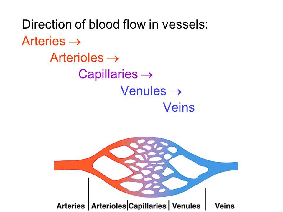 Direction of blood flow in vessels: Arteries  Arterioles  Capillaries  Venules  Veins