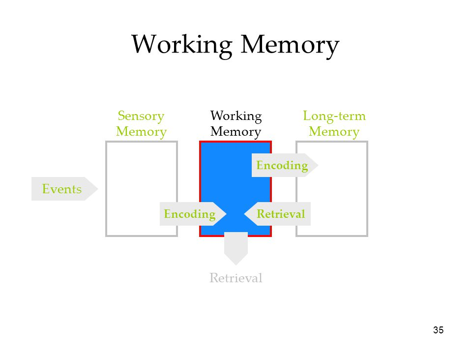 34 Sensory Memories Iconic 0.5 sec. long Echoic 3-4 sec. long Hepatic < 1 sec. long The duration of sensory memory varies for the different senses.