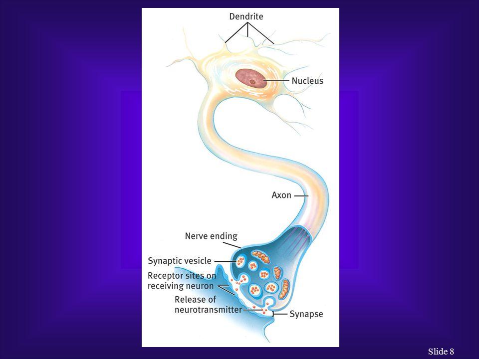 Slide 9 How Do Biological Theorists Explain Abnormal Behavior.