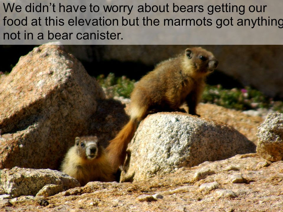 We didn't have to worry about bears getting our food at this elevation but the marmots got anything not in a bear canister.