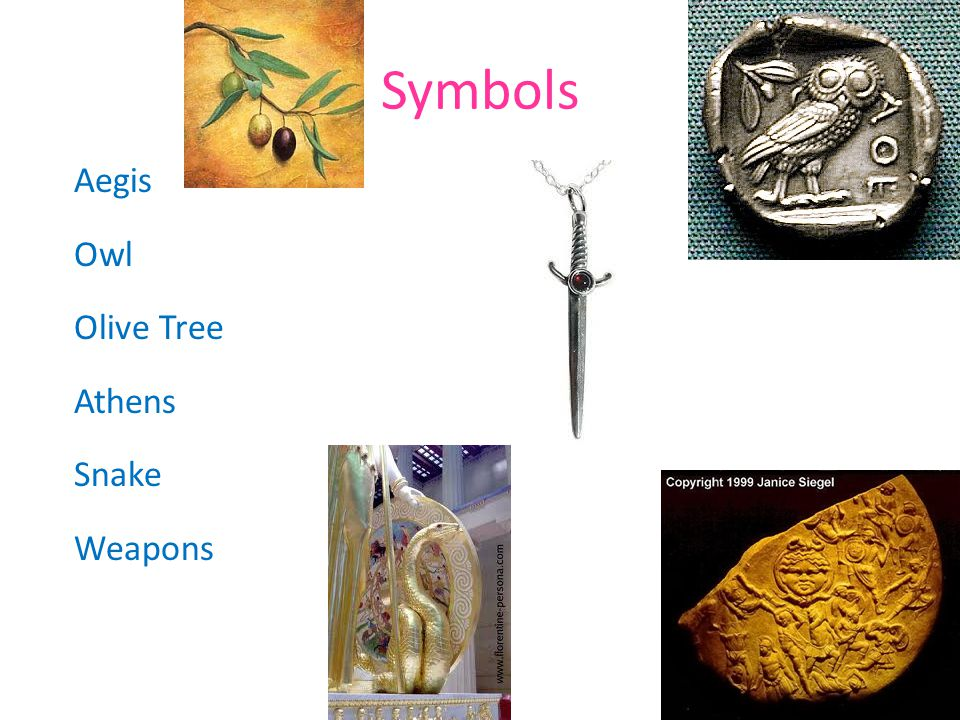 Symbols Aegis Owl Olive Tree Athens Snake Weapons