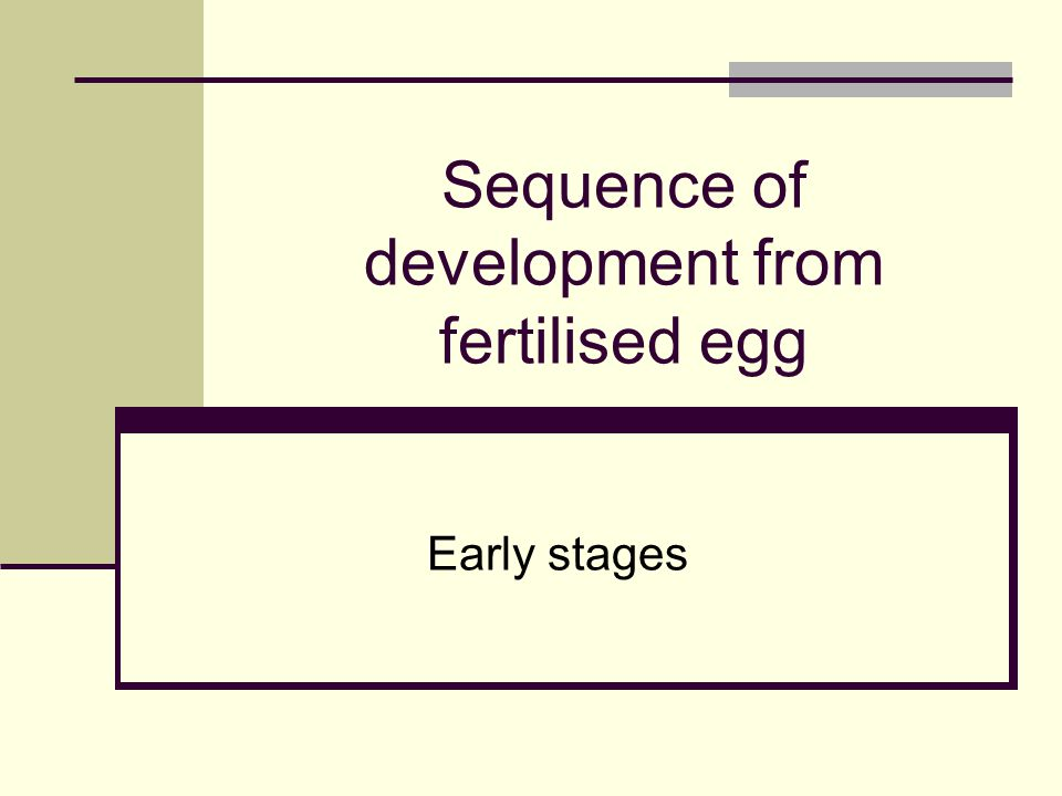 Sequence of development from fertilised egg Early stages