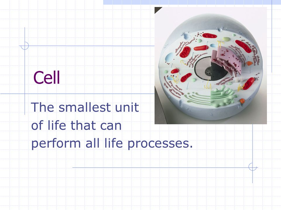 Cell The smallest unit of life that can perform all life processes.