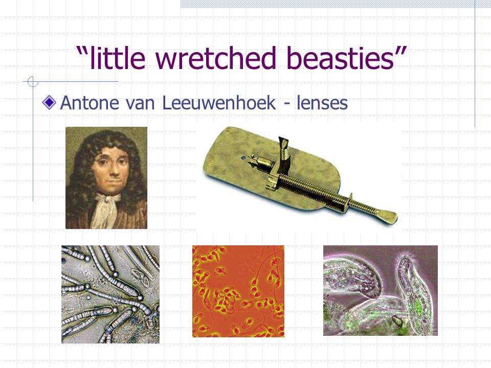 little wretched beasties Antone van Leeuwenhoek - lenses