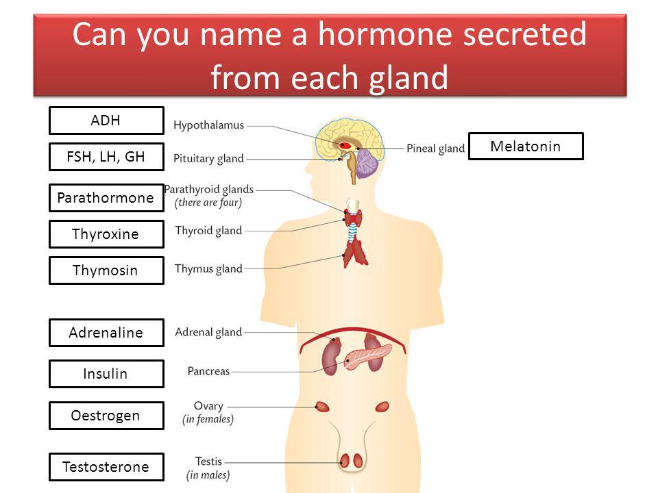 Can you name a hormone secreted from each gland Melatonin ADH FSH, LH, GH Parathormone Thyroxine Thymosin Adrenaline Insulin Oestrogen Testosterone