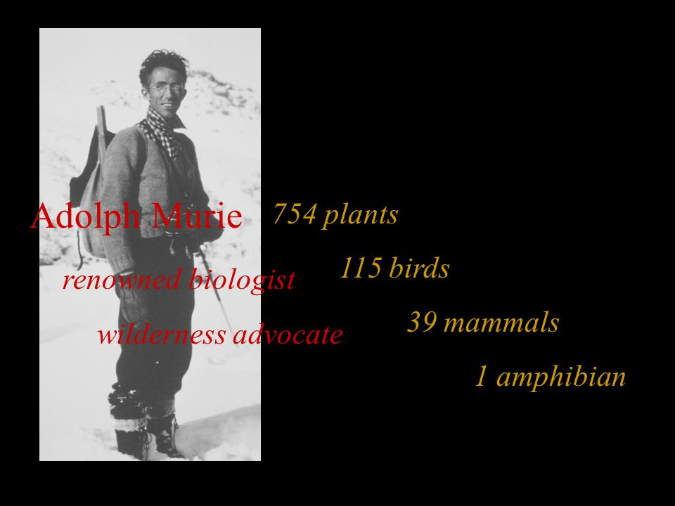 754 plants 115 birds 39 mammals 1 amphibian Adolph Murie renowned biologist wilderness advocate