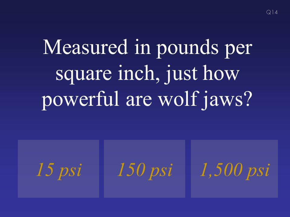 Measured in pounds per square inch, just how powerful are wolf jaws? 150 psi1,500 psi15 psi Q14