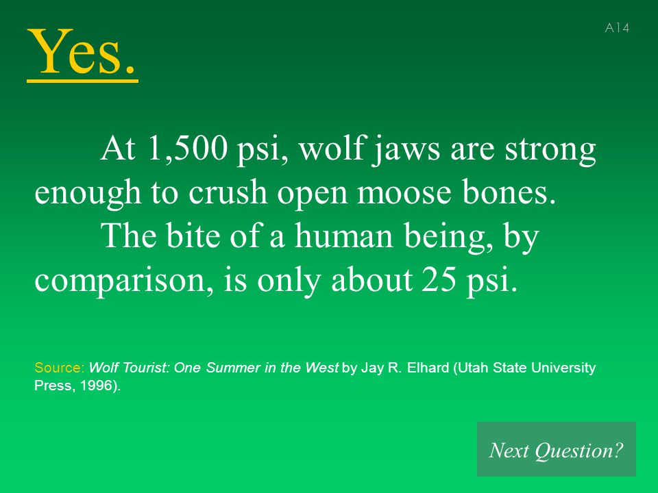 Yes. A14 At 1,500 psi, wolf jaws are strong enough to crush open moose bones.