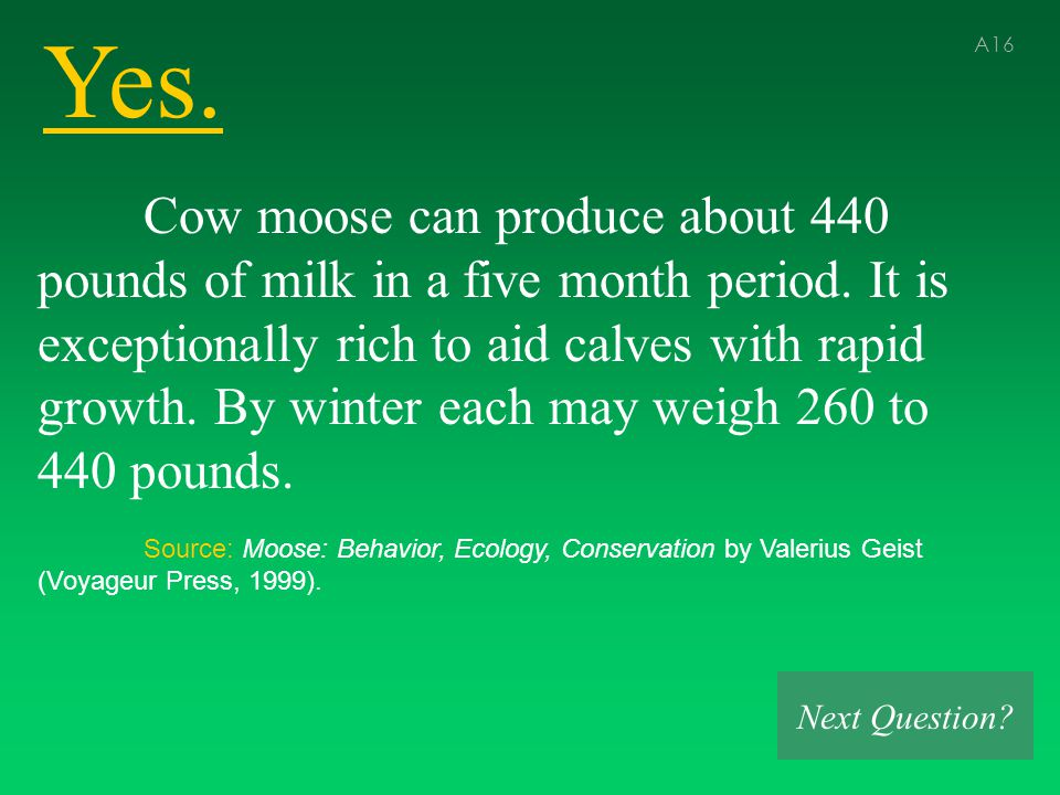 Yes. A16 Cow moose can produce about 440 pounds of milk in a five month period.