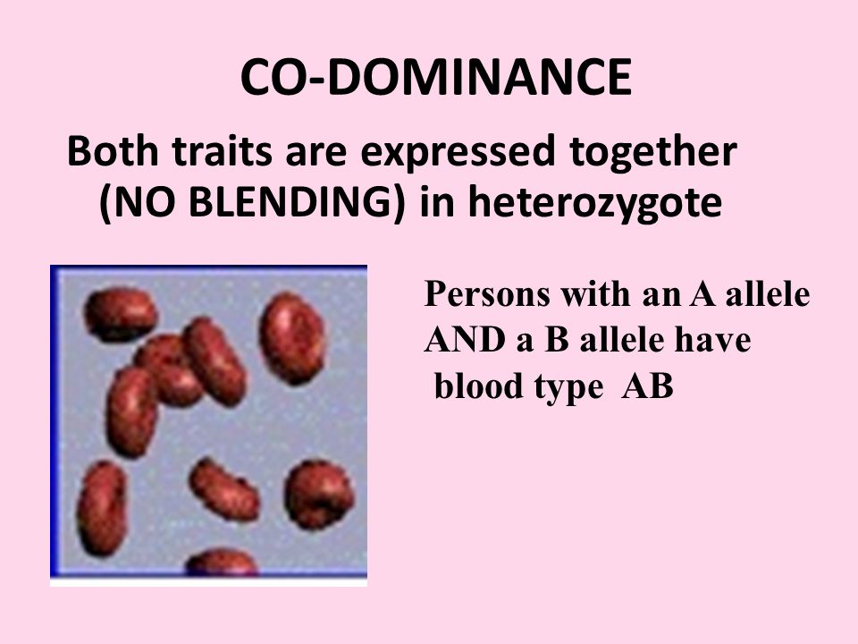 CO-DOMINANCE Both traits are expressed together (NO BLENDING) in heterozygote Persons with an A allele AND a B allele have blood type AB