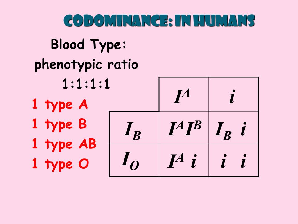 IAIA IBIB IBIB IAIA i i ii IAIA i IBIB IOIO Codominance: in humans Blood Type: phenotypic ratio 1:1:1:1 1 type A 1 type B 1 type AB 1 type O