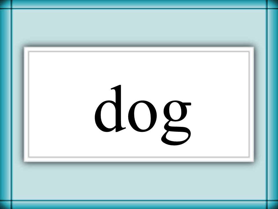 Thornton 2006 dog