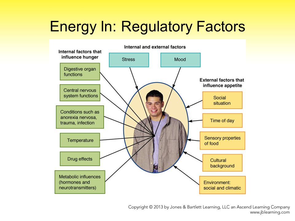 Energy Out: Fuel Uses Total energy expenditure Major components of energy expenditure –Energy expenditure at rest (basal energy expenditure) Energy for basic body functions Affected by body size, composition, age, and gender