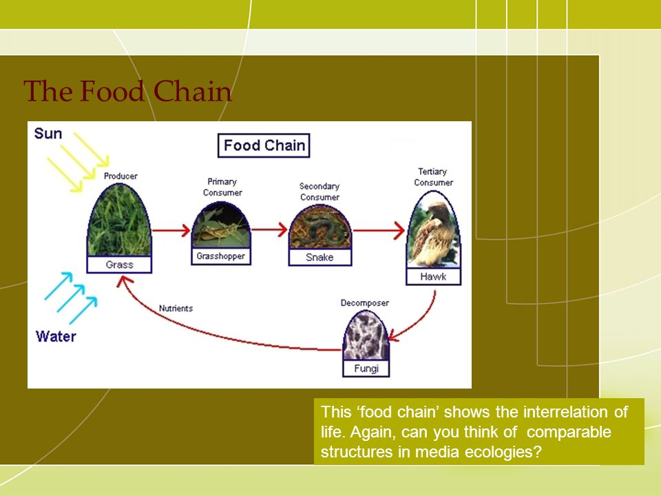The Food Chain This 'food chain' shows the interrelation of life. Again, can you think of comparable structures in media ecologies?