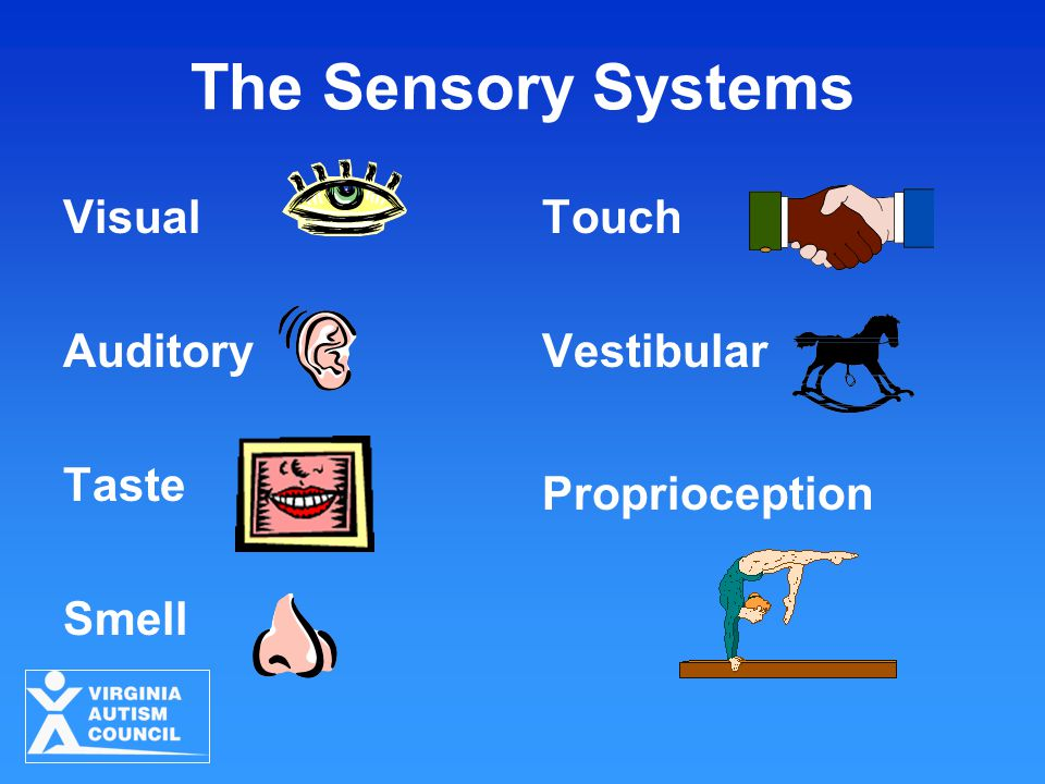 The Sensory Systems Visual Auditory Taste Smell Touch Vestibular Proprioception